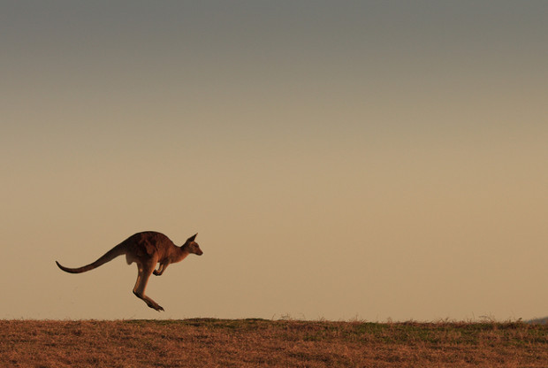 Kangaroo Express hops into North Carolina captive